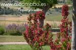 www.alcamabu.es Diseño, construcción y mantenimiento de jardines en Valladolid